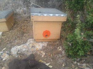 Ahşap Ana Arı Kutusu